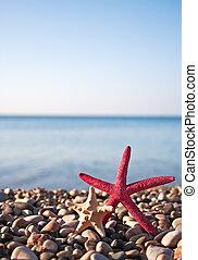 Two starfish