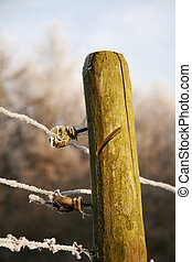 Wooden pole and barbwire - A close-up of a pole with...
