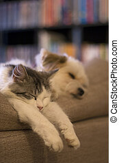 cute cat and dog sleeping togeather - null