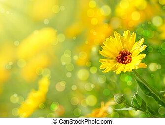 Nagietek, kwiat