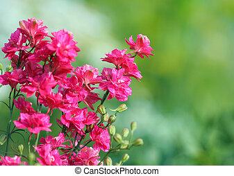 Delphinium flower - Close-up of Delphinium flower