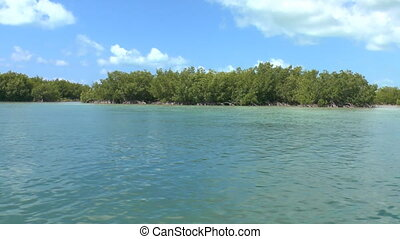 Mangrove forest on shores of Cayo Largo, Cuba