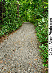 Foot Path - Gravel path through green trees in the summer