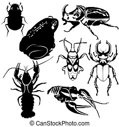 Fauna - The contours of amphibian, arthropods and insects....