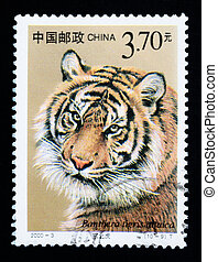 CHINA - CIRCA 2000: A stamp printed in China shows Panthera...