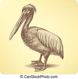 Pelican Bird, hand drawing. Vector