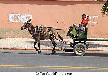 An arabian man driving a horse