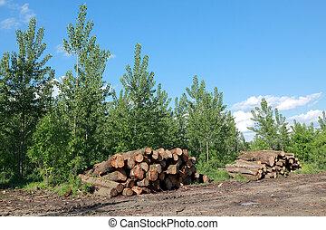 Lumber industry - Heap of freshly sawed wood in spring...