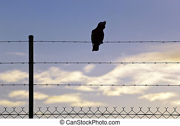 Silhouetted Bird on Wire