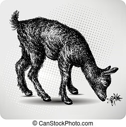 Small goat in the pasture, hand drawing, vector illustration