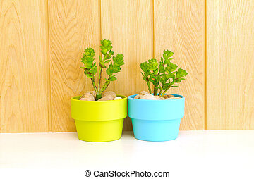 Collection of daisy tree in  green flowerpot and blue flowerpot. on wood background.
