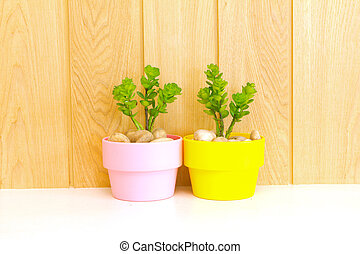 Collection of daisy tree  in pink flowerpot and yellow flowerpot