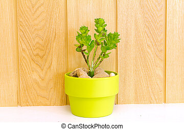 Collection of daisy tree  in Green flowerpot.
