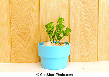 Collection of daisy tree  in blue flowerpot.