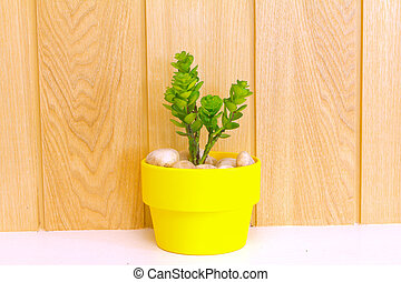 Collection of daisy tree  in yellow flowerpot.