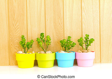 Collection of daisy tree in colorful flowerpot. - Collection...