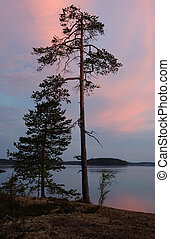 Polar Karelia sunset on the shore of Engozero lake during...
