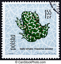 Postage stamp Poland 1963 Green Toad, Amphibian - POLAND -...
