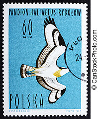Postage stamp Poland 1964 Osprey, Bird of Prey - POLAND -...