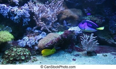 Fish - The blue fish in the ocean against the backdrop of...