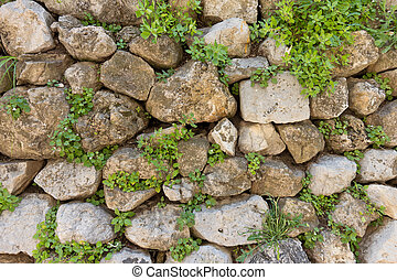 Texture of old stone wall and green plants - Texture of old...