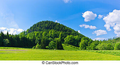 Lonely hill covered by forest