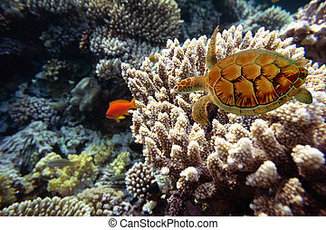 Coral fishes of Red sea. Egypt