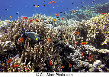 Tropical Fish on Coral Reef - Tropical fish on Coral Reef...