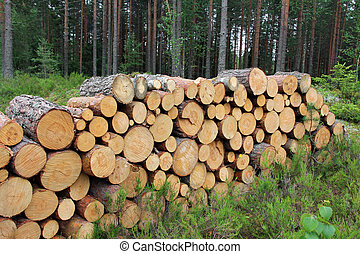 Firewood Logs in Summer Forest - Small firewood logs stacked...