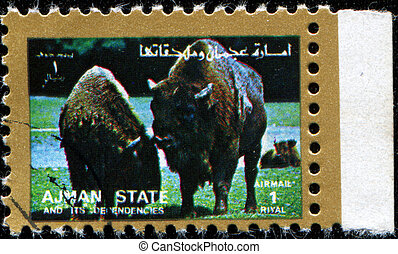 American bisons - AJMAN - CIRCA 1972: A stamp printed in...