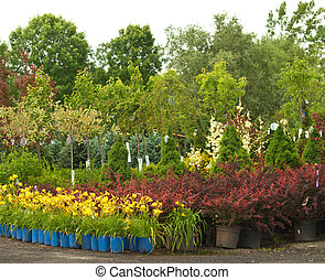 plants for sale - plants outside a nursery for sale in...