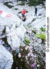 Mountaineering in the Alps - hikers walking up a hiking trail