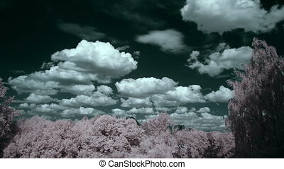 clouds & trees, infrared time lapse