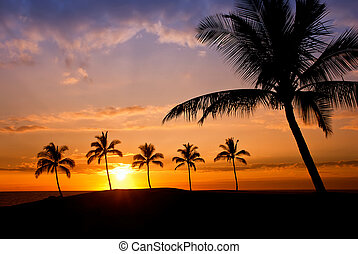 Hawaiian palm tree sunset on Big Island