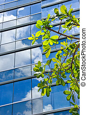 Tree with modern office building and blue sky reflection