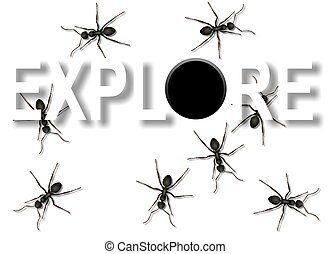 explore - a group of black ants coming out from a hole and...