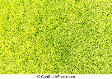 Green grass background texture tilted