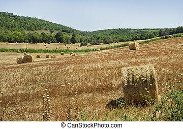 hayfields in Maremma, Tuscany
