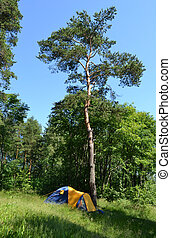 Camping tent and forest