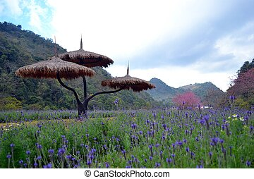 Flowers in sky - Mountain and flowers in thailand
