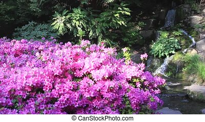 Rhododendron Flowers by Waterfall in Spring Season 1080p