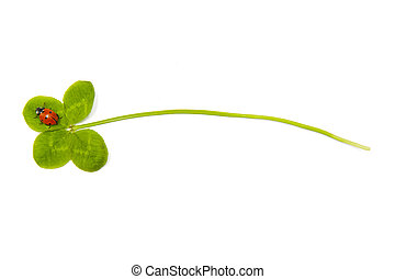 Four leaf clover and ladybird isolated on the white...
