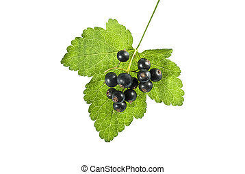 Blackcurrant with leaf on a white background