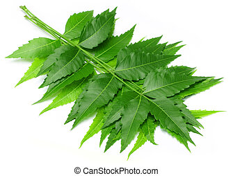 Tender medicinal neem leaves over white background