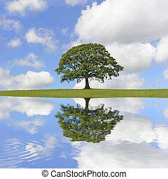 roble, árbol, belleza