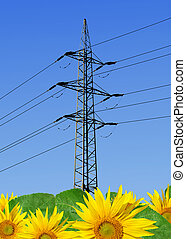 sunflower field with power line on blue sky