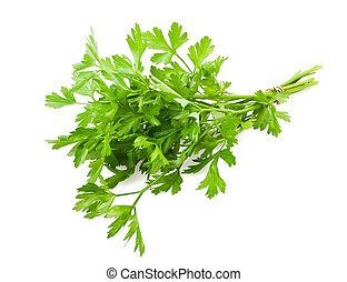 Parsley bunch  isolated on white