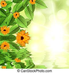 花, 自然, 太陽, 反映された, 水, 緑, 背景