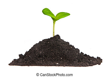 Heap dirt with a green plant sprout isolated on white...