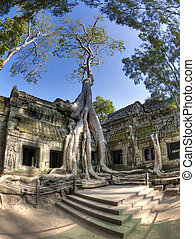Ta Prohm - Jungle overtakes the ancient temple Ta Prohm near...